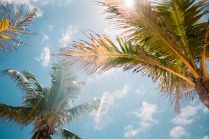 Sun filters through trees in the sunshine state, where the CE laws require more specific training than in other areas. These courses will help provide training for Floridian counsellors.